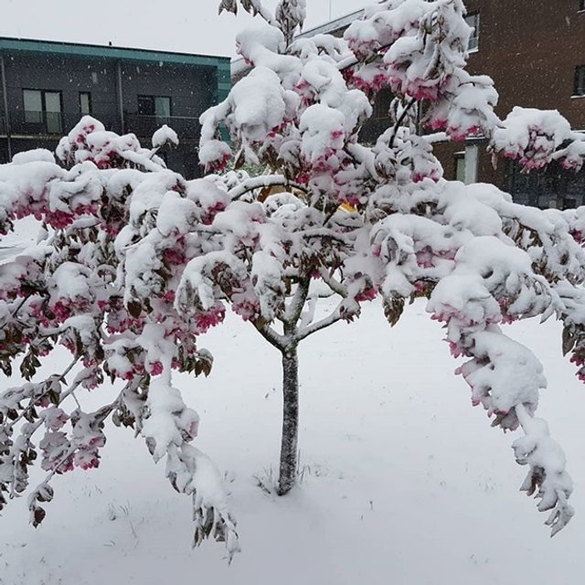 Європу засипало снігом: епічні фото - фото 403547