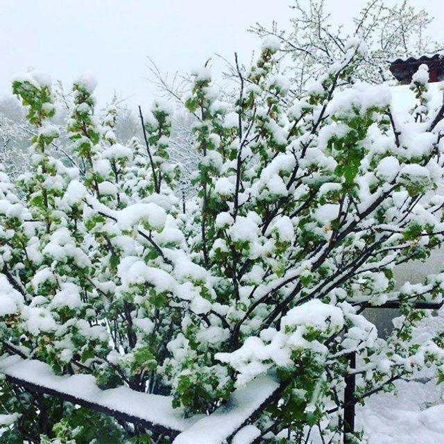 Європу засипало снігом: епічні фото - фото 403548