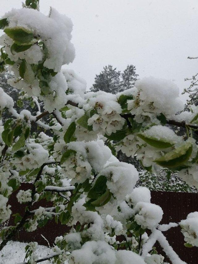 Європу засипало снігом: епічні фото - фото 403549