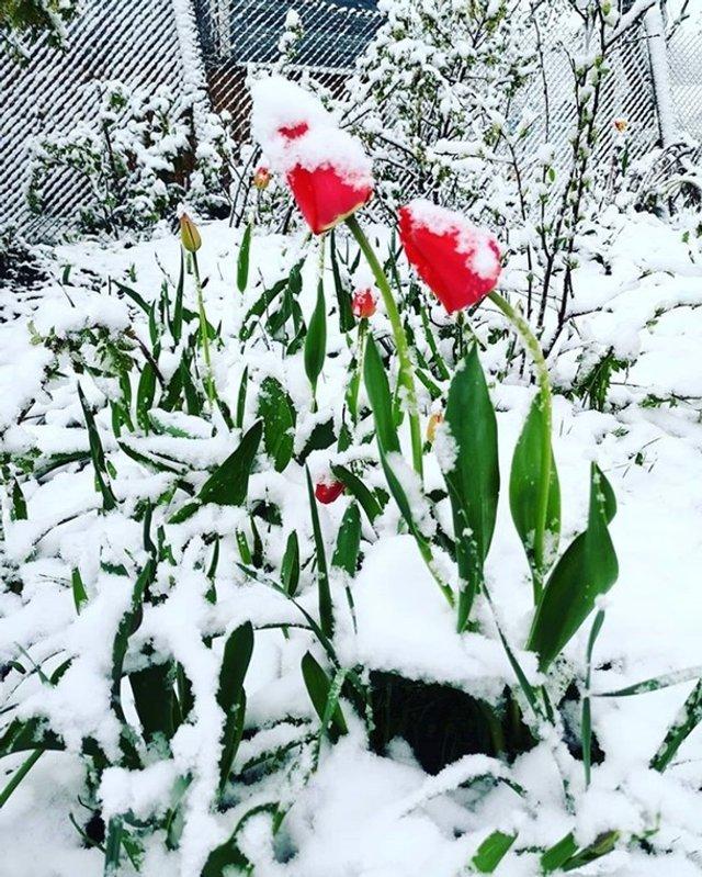 Європу засипало снігом: епічні фото - фото 403551
