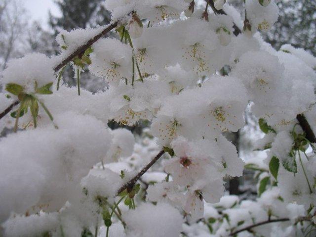 Європу засипало снігом: епічні фото - фото 403552