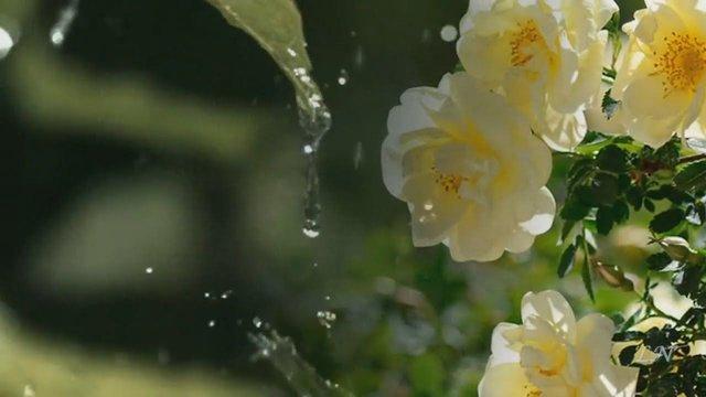 Дощ  - фото 405442