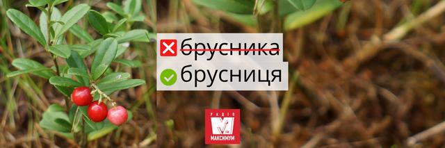 Не клубніка і не клюква: правильні назви улюблених ягід українською - фото 408044
