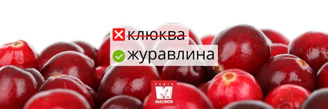Не клубніка і не клюква: правильні назви улюблених ягід українською - фото 408047