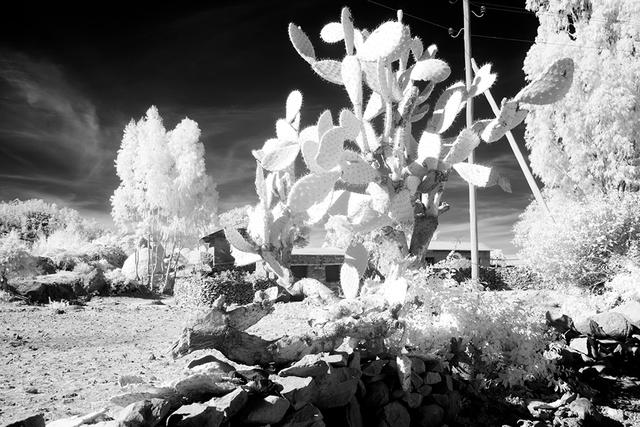 Фотограф показав світ в інфрачервоній зйомці - фото 410982