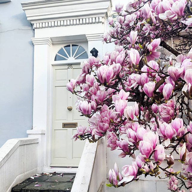 Квітучі помешкання Лондона, які приковують погляд (фото) - фото 411722