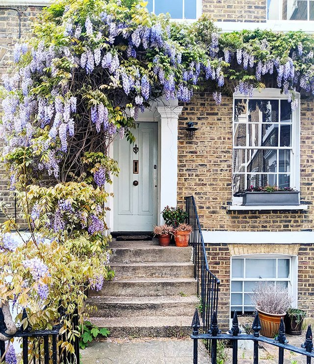 Квітучі помешкання Лондона, які приковують погляд (фото) - фото 411733