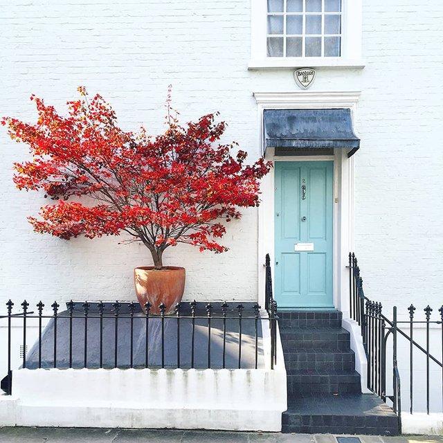 Квітучі помешкання Лондона, які приковують погляд (фото) - фото 411735
