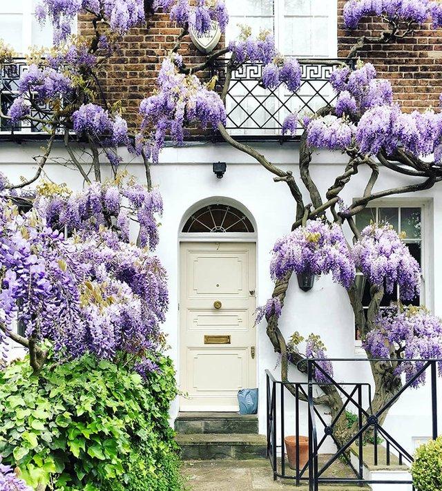 Квітучі помешкання Лондона, які приковують погляд (фото) - фото 411738