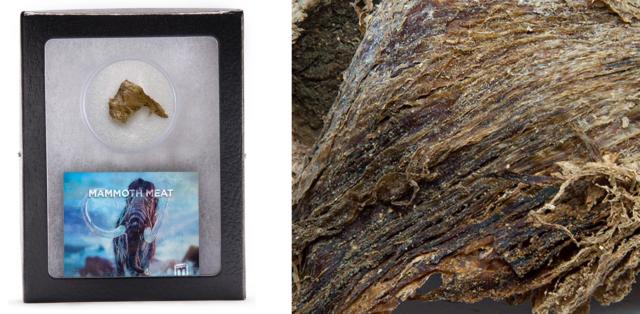 Кістка тиранозавра і фольга з місії Аполлон-11: американський стартап продає рідкісні речі - фото 411987