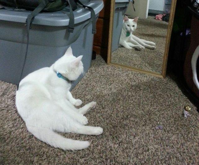 Домашні улюбленці і дзеркало: кумедні фото для гарного настрою - фото 412912
