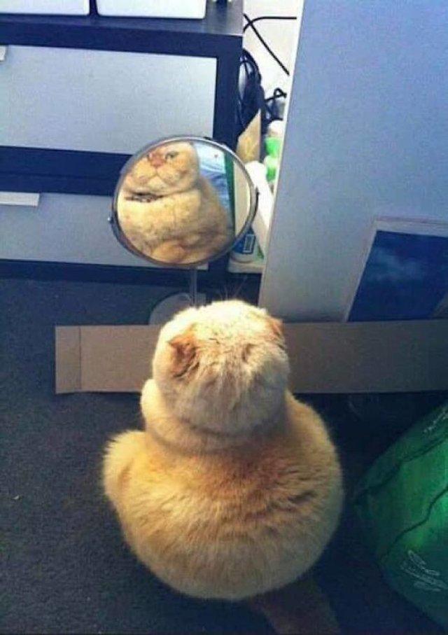 Домашні улюбленці і дзеркало: кумедні фото для гарного настрою - фото 412913