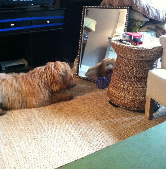Домашні улюбленці і дзеркало: кумедні фото для гарного настрою - фото 412914