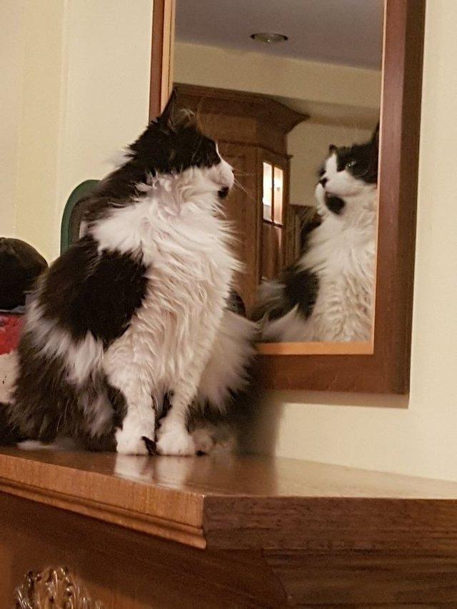 Домашні улюбленці і дзеркало: кумедні фото для гарного настрою - фото 412916