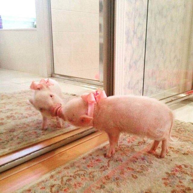 Домашні улюбленці і дзеркало: кумедні фото для гарного настрою - фото 412917