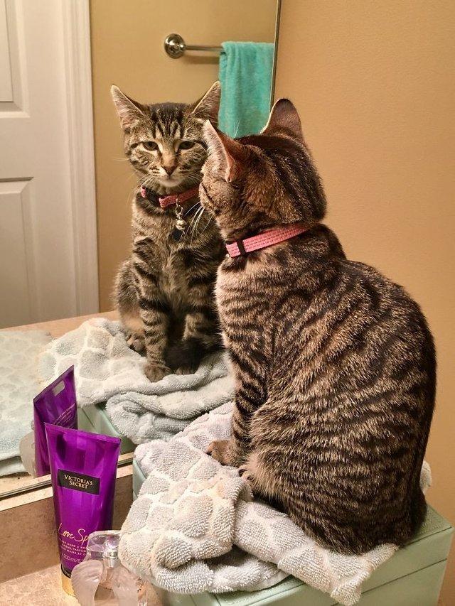 Домашні улюбленці і дзеркало: кумедні фото для гарного настрою - фото 412919
