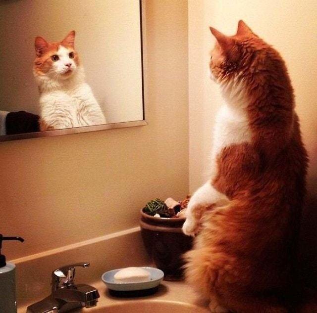 Домашні улюбленці і дзеркало: кумедні фото для гарного настрою - фото 412920