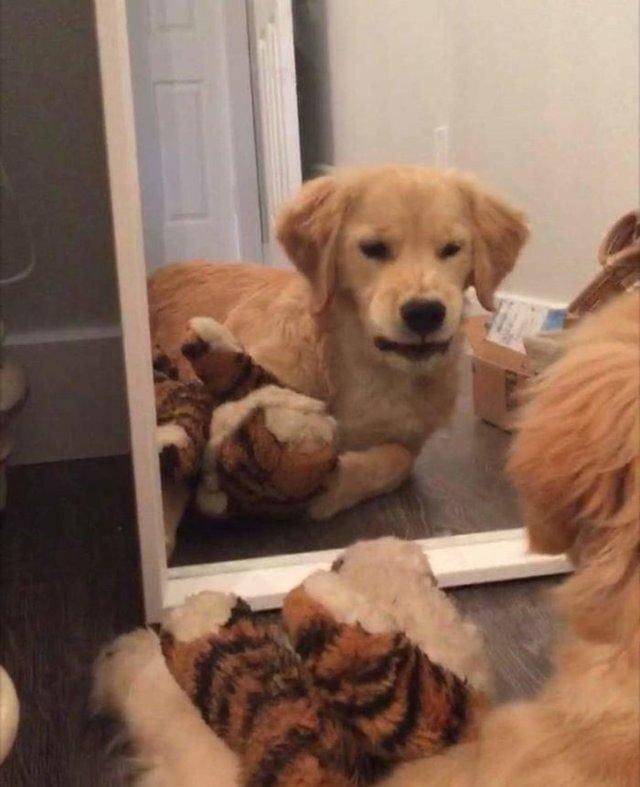 Домашні улюбленці і дзеркало: кумедні фото для гарного настрою - фото 412921