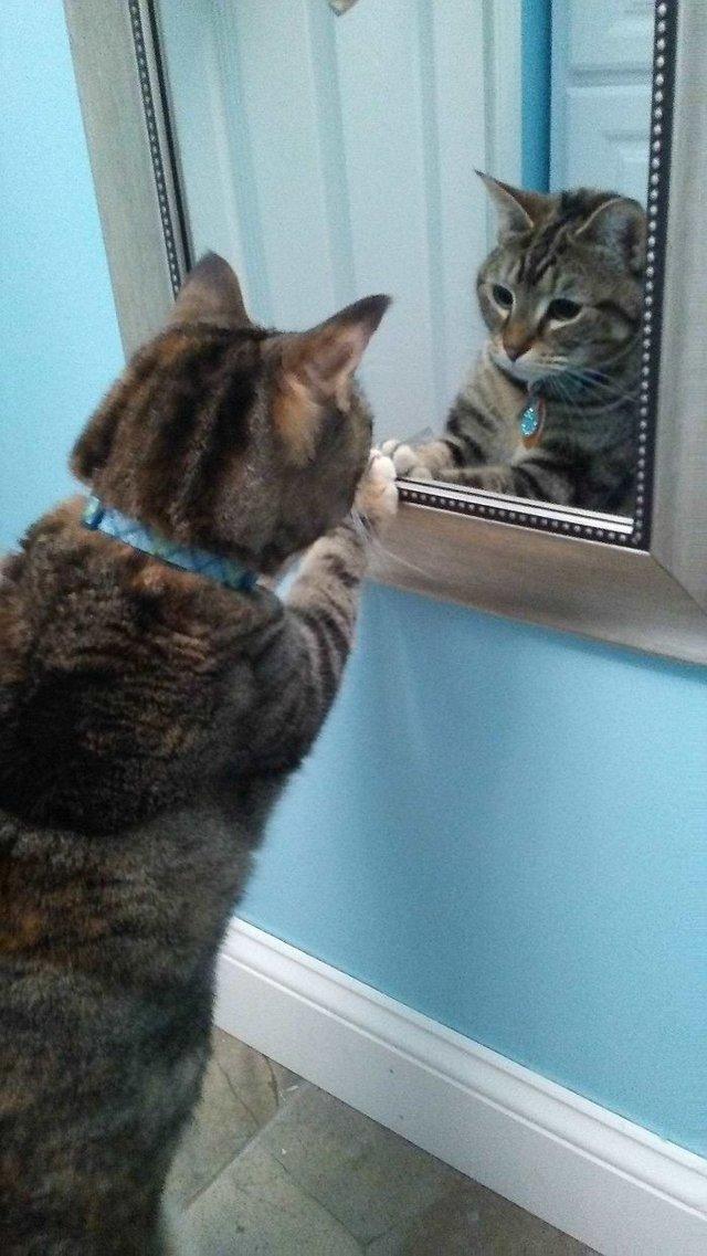 Домашні улюбленці і дзеркало: кумедні фото для гарного настрою - фото 412923