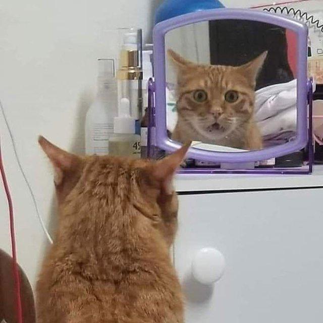 Домашні улюбленці і дзеркало: кумедні фото для гарного настрою - фото 412924