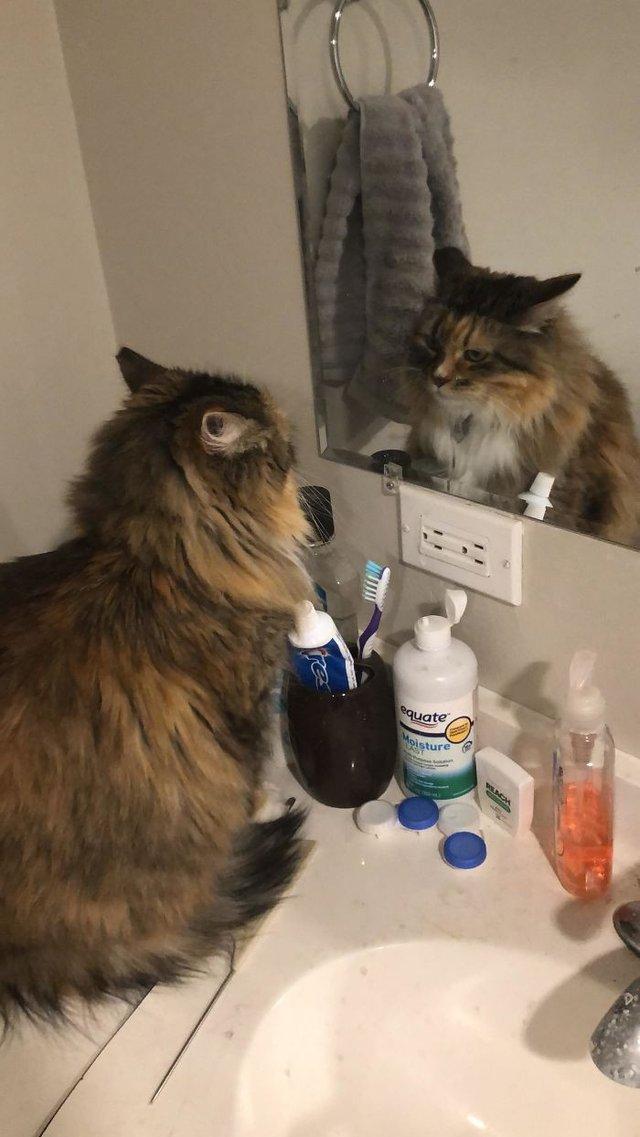 Домашні улюбленці і дзеркало: кумедні фото для гарного настрою - фото 412925