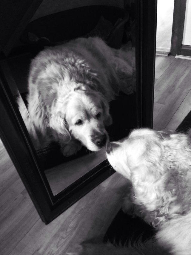 Домашні улюбленці і дзеркало: кумедні фото для гарного настрою - фото 412926
