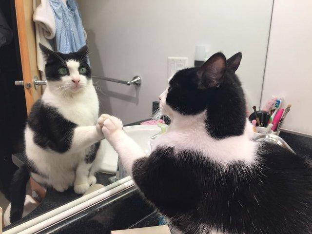 Домашні улюбленці і дзеркало: кумедні фото для гарного настрою - фото 412927