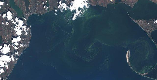 Чорне море знову стало зеленим: у мережі діляться знімками незвичайного явища - фото 413125