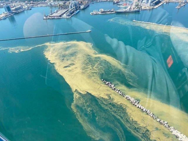 Чорне море знову стало зеленим: у мережі діляться знімками незвичайного явища - фото 413128