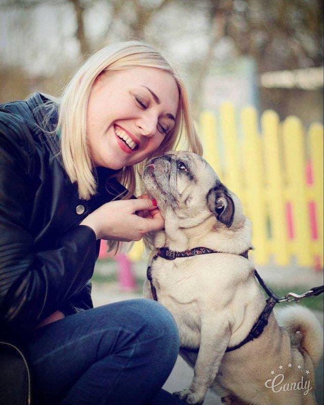 Лабрадор Melovina і болонка Каменських: добірка зіркових песиків до Дня собак - фото 413644