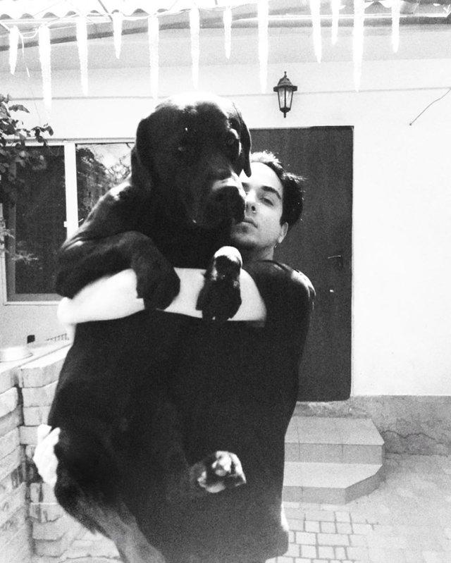 Лабрадор Melovina і болонка Каменських: добірка зіркових песиків до Дня собак - фото 413649