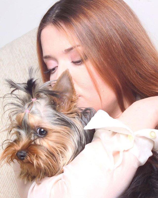 Лабрадор Melovina і болонка Каменських: добірка зіркових песиків до Дня собак - фото 413652