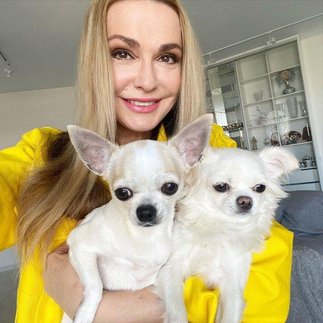 Лабрадор Melovina і болонка Каменських: добірка зіркових песиків до Дня собак - фото 413659