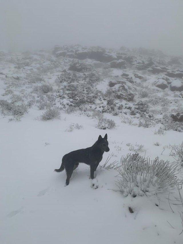 Південну Африку засипало снігом: вражаючі кадри - фото 416071