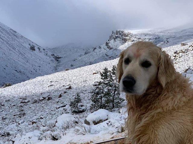 Південну Африку засипало снігом: вражаючі кадри - фото 416077