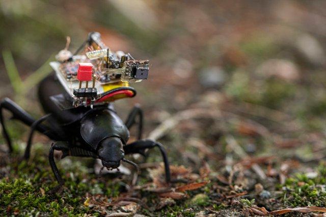 Світ очима Людини-Мурахи: учені створили мініатюрну камеру GoPro для комах - фото 416343