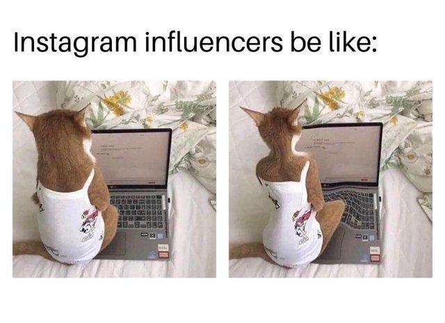 Типова блогерка: мем з котом підкорив мережу - фото 416492