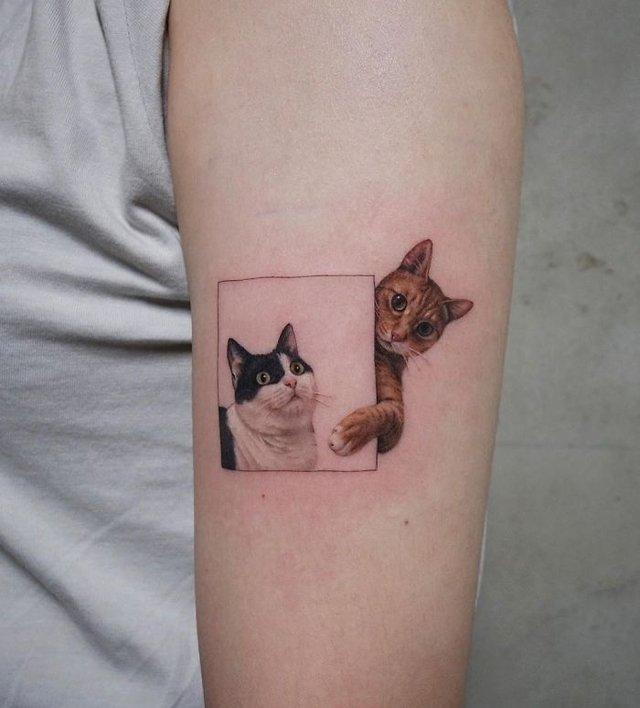 35 крутих тату з котами, які ви захочете зробити і собі: фотодобірка - фото 418094
