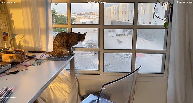 З'явився сайт, де можна дивитися на вид з вікна у будь-якому місті світу - фото 419108