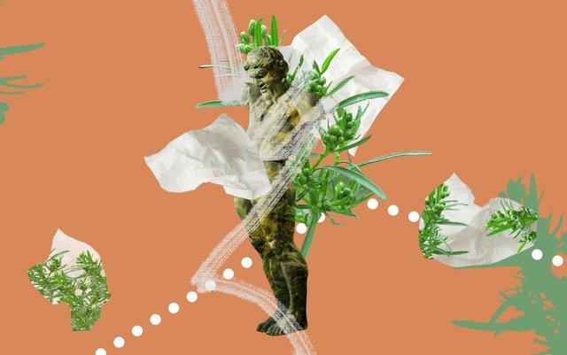 Пік цвітіння амброзії: як рятуватися людям з алергією - фото 420274