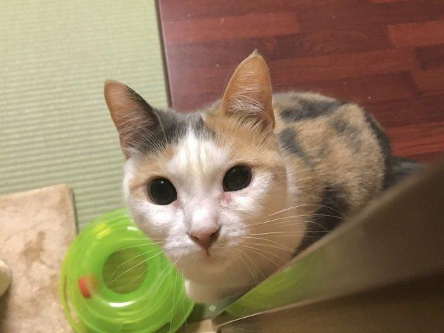 Готель у Японії пропонує орендувати на ніч кота - фото 421202