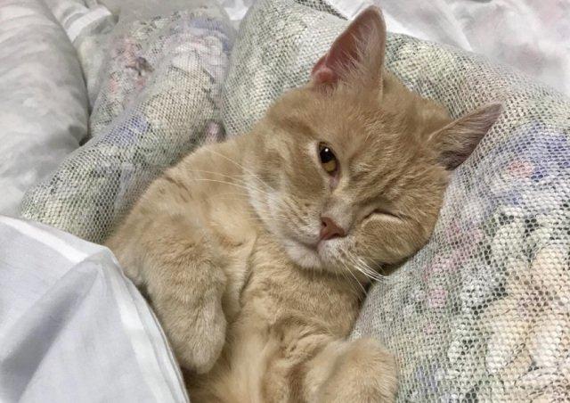 Готель у Японії пропонує орендувати на ніч кота - фото 421203