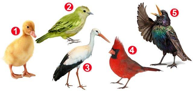 Тест для жінок: оберіть птаха на фото і дізнайтесь про свій характер - фото 422164