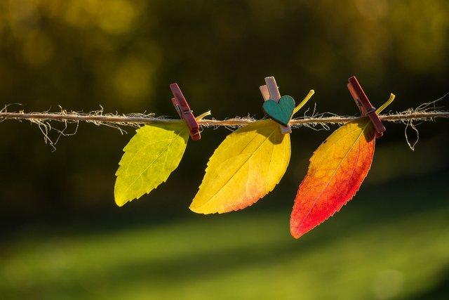 Цитати про осінь: гарні вислови та афоризми про осінню пору українською - фото 422918