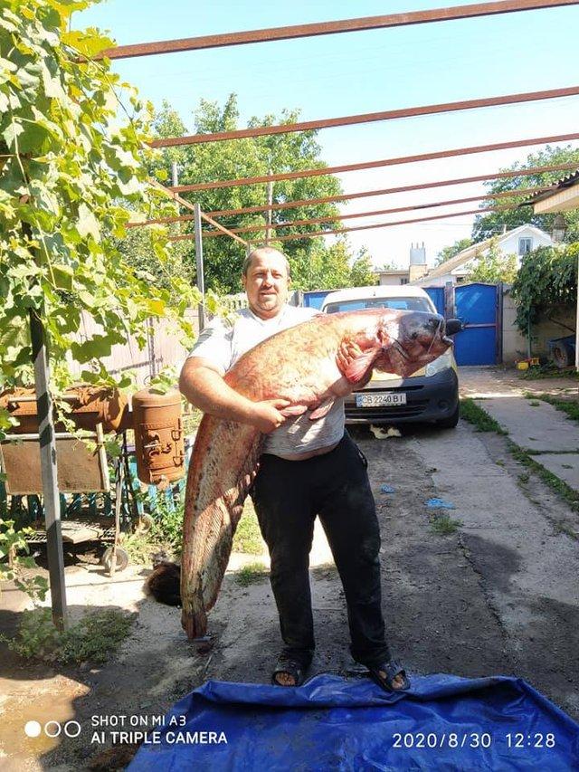 Житель Чернігівщини упіймав гігантського сома: вражаючі фото - фото 423029