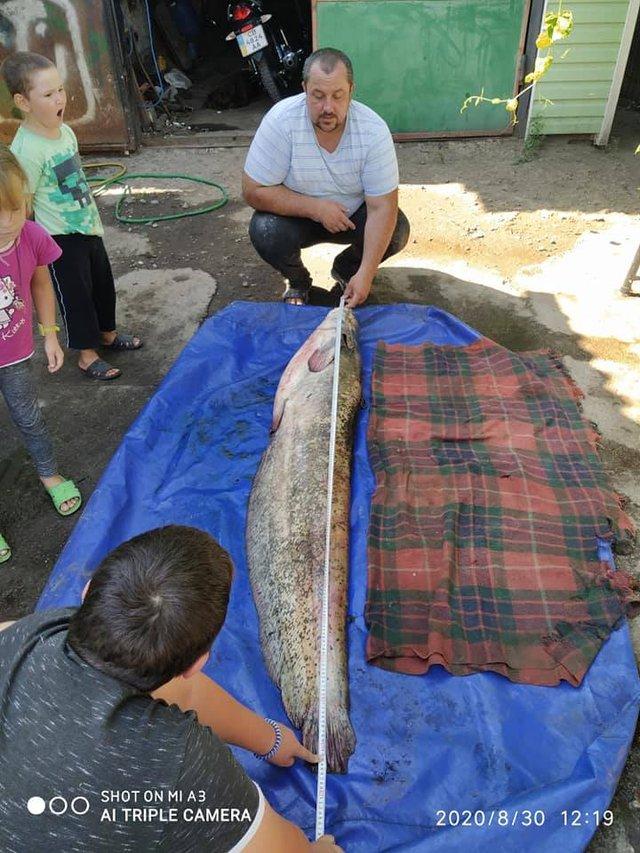 Житель Чернігівщини упіймав гігантського сома: вражаючі фото - фото 423030
