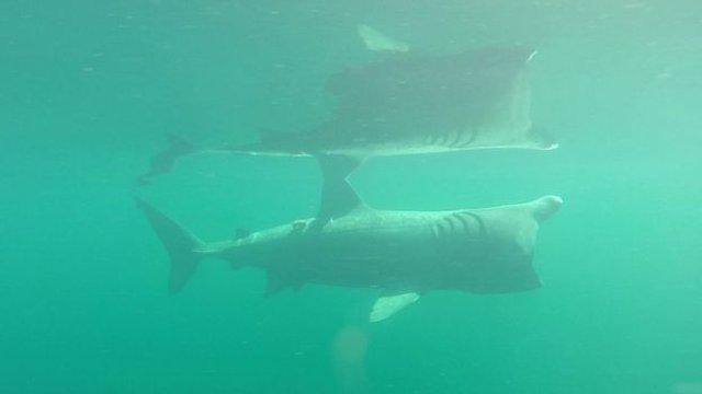 У Шотландії на морські фотопастки вдалося зняти гігантських акул - фото 423309