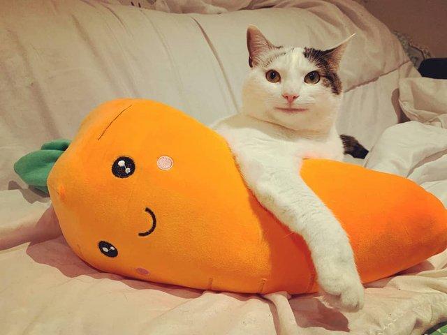 Кумедний кіт прославився завдяки широкій посмішці: веселі кадри - фото 423333