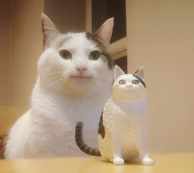 Кумедний кіт прославився завдяки широкій посмішці: веселі кадри - фото 423336
