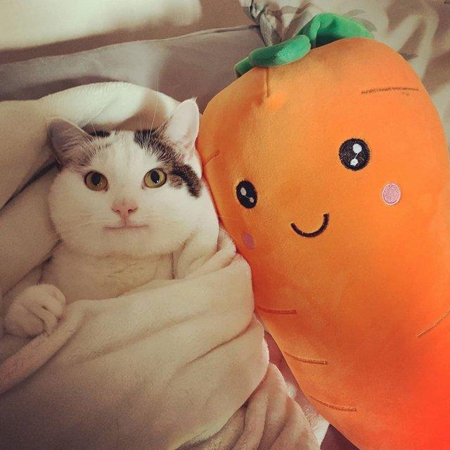 Кумедний кіт прославився завдяки широкій посмішці: веселі кадри - фото 423337